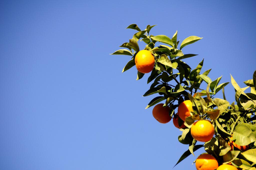 Sewilijska pomarańcza